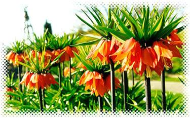 Flowers from Botanic Gardens, Cambridgeshire, England